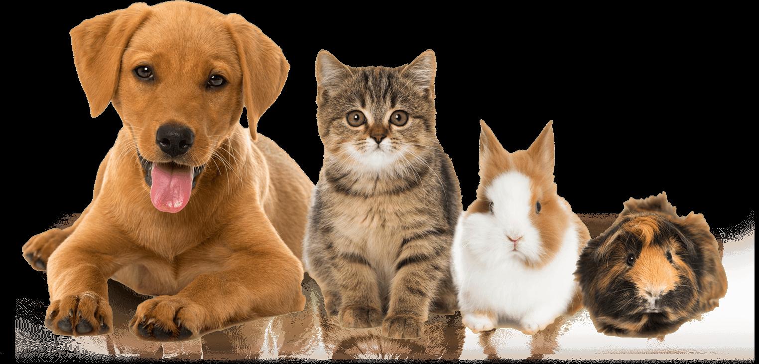 pets at charter vets