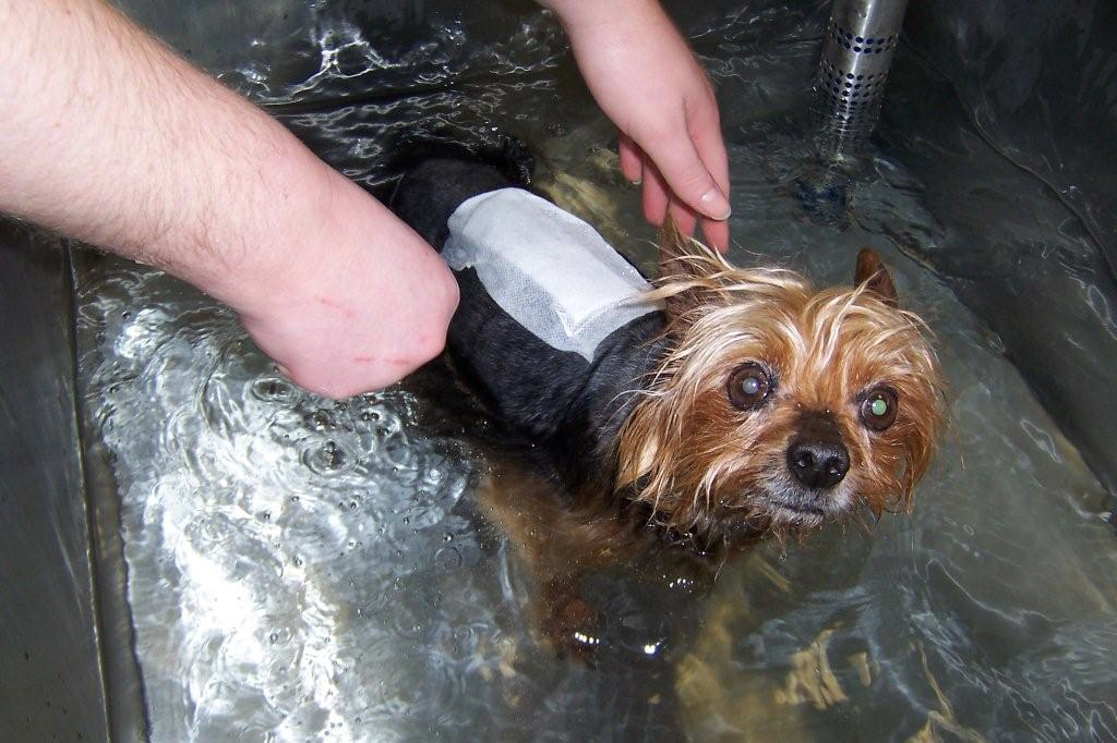 hydrotherapy at Charter Vets in North Devon
