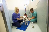 Charter Vets intensive care - nursing