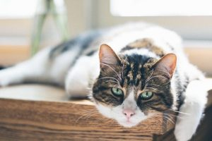 Charter vets cat for endocrinology campaign